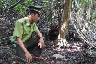 BQL VQG Phong Nha – Kẻ Bàng: Tăng cường các biện pháp bảo vệ động vật hoang dã khu vực VQG Phong Nha – Kẻ Bàng